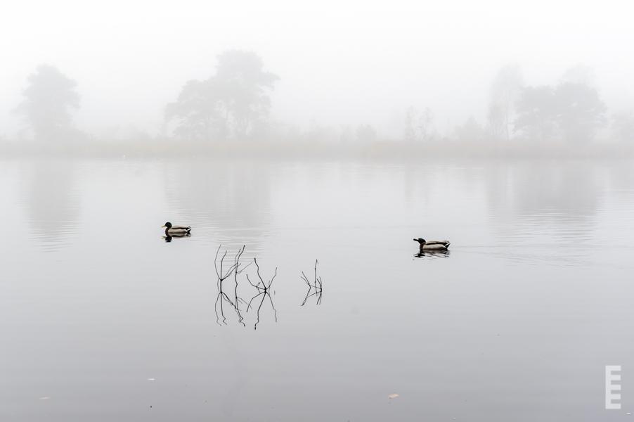 foggy-visions_01-1